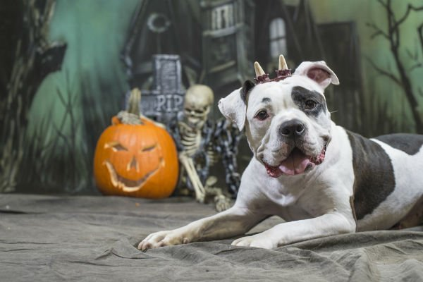 Risks of Dog Bites on Halloween