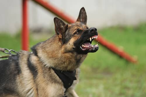 Dog Bites and Animal Attacks - Facts & Figures in Illinois